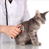 Ветеринарные клиники в Тавде